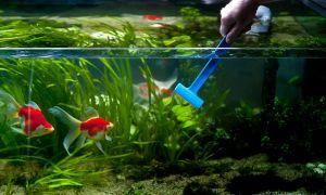 Как проводится чистка аквариума?