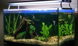 Почему мутнеет вода в новом и старом аквариумах