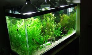 Как сделать светодиодное освещение аквариума своими руками