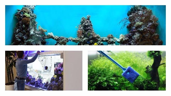 Как проводится чистка аквариума