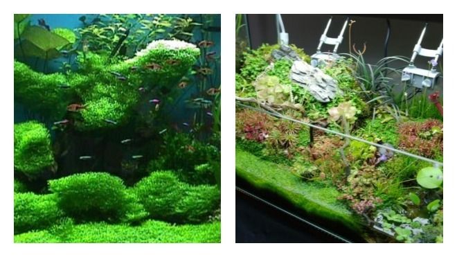 как закрепить растения в большом аквариуме
