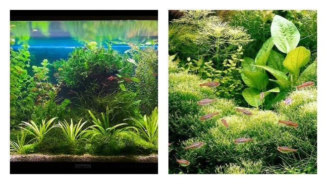 Как подобрать растения для аквариума