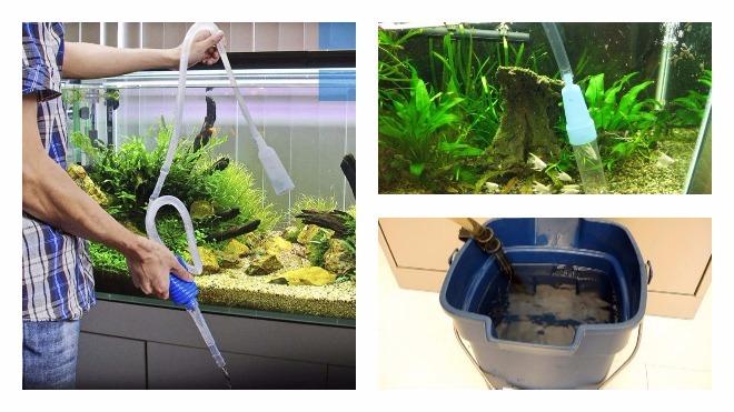 Совет аквариумиста как часто менять воду в аквариуме
