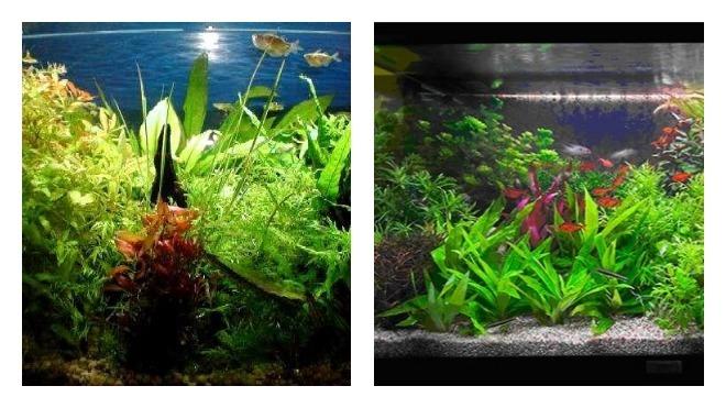 Аквариумные растения и уход за ними