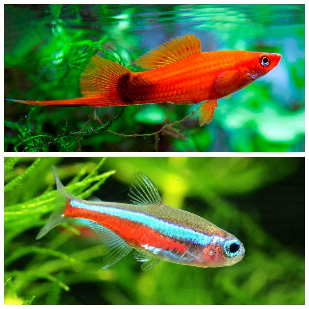Все виды аквариумных рыб фото и описание