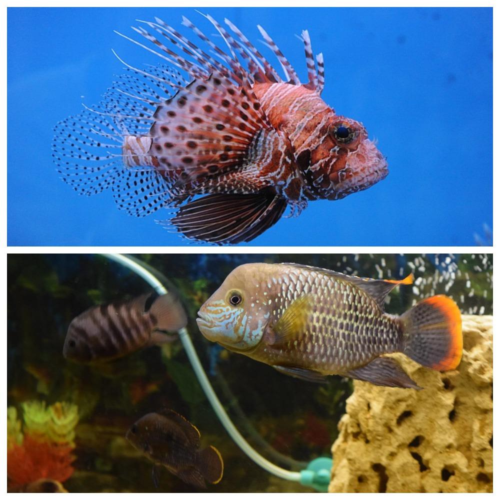 теперь уже хищные рыбы название фото аквариумные увидите подробное фото